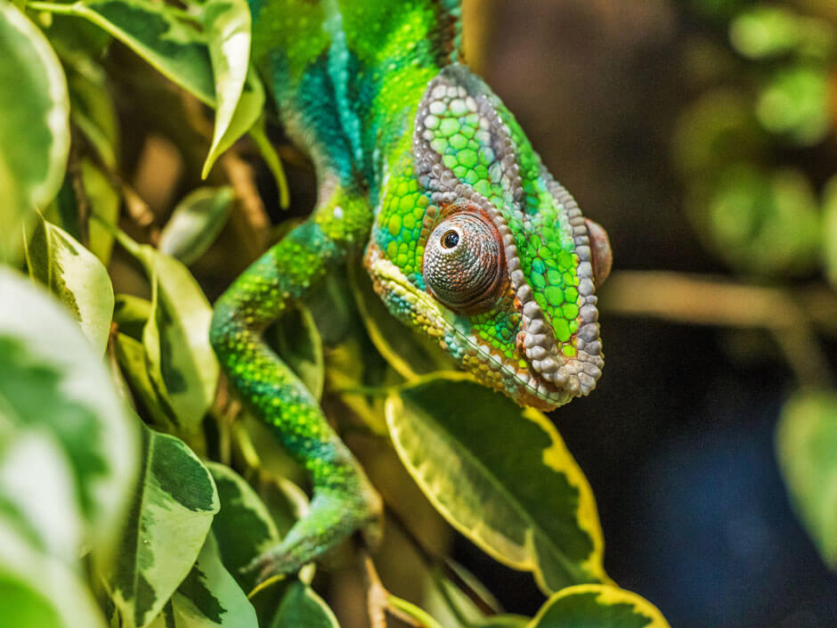 Madagascar Places on the Verge | Butterfield & Robinson
